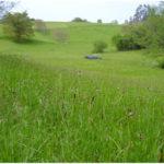 Grassland Ecosystems - Tropical Savannah, Temperate Grassland & More