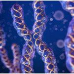 The Chromosomal Theory of Inheritance