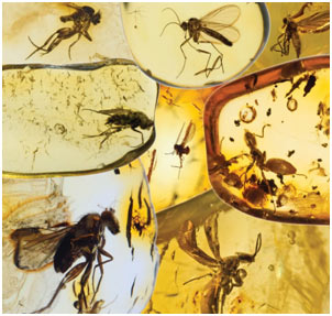 Evolution-of-Insects