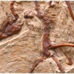 Evidences of Biological Evolution
