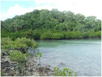Estuarine-Ecosystem