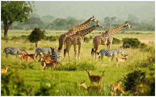 Importance-of-Biodiversity