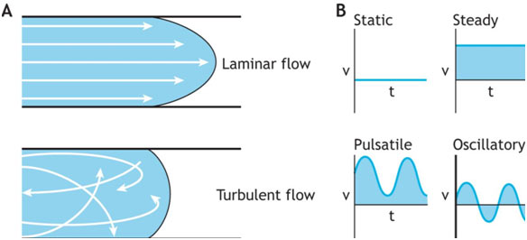 Fluid-Flow-and-Equation