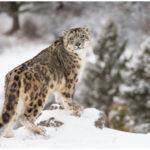 Wildlife in Himalayas