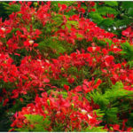 5 Famous Plants in Family Fabaceae