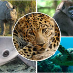 Top 10 Endangered Animals on the Planet Earth
