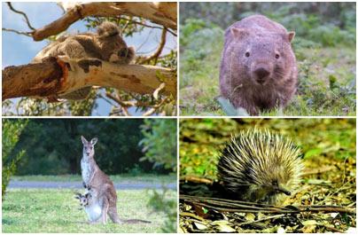 Wildlife-of-Australia