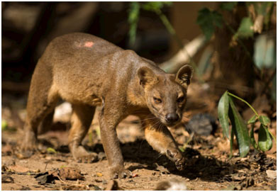 Wildlife-of-Madagascar