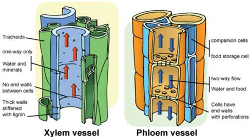 Compound-Tissues