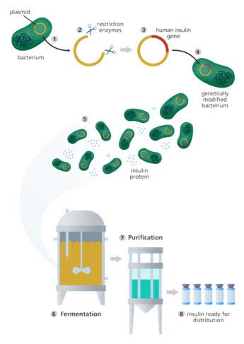 Transgenic-Bacteria