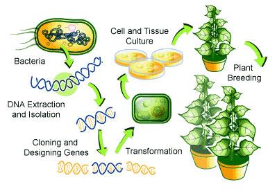 Transgenic-Plants