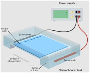 Agarose-gel-electroph