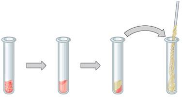 Method-of-DNA-Extract