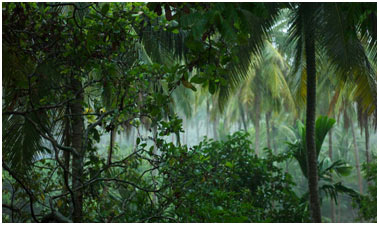 Tropical-Forests