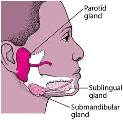 Oral-Glands-Animals
